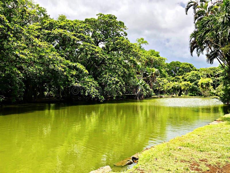 Τροπικό δάσος και ποταμός, νησί του Μαυρίκιου στοκ εικόνες