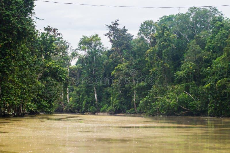 Τροπικό δάσος κατά μήκος του kinabatangan ποταμού, Sabah, Μπόρνεο Malaysi στοκ φωτογραφίες