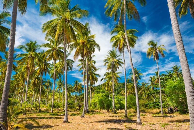 Τροπικό δάσος με τους φοίνικες καρύδων στοκ φωτογραφία με δικαίωμα ελεύθερης χρήσης