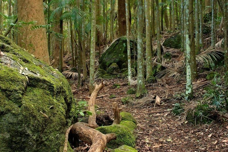τροπικό δάσος μονοπατιών στοκ φωτογραφίες