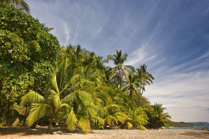 τροπικό δάσος παραλιών στοκ φωτογραφία με δικαίωμα ελεύθερης χρήσης