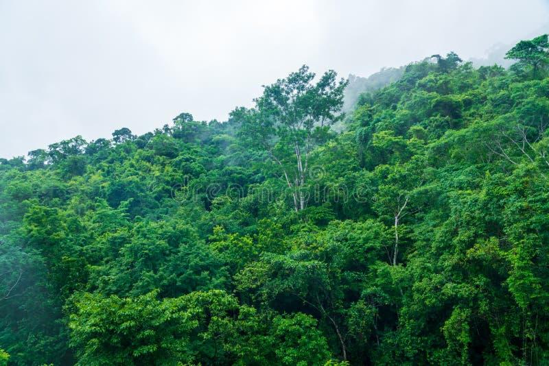 Τροπικό δάσος στους λόφους γύρω από το Jaco, Puntarenas, Κόστα Ρίκα στοκ φωτογραφίες με δικαίωμα ελεύθερης χρήσης