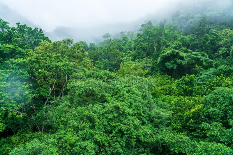 Τροπικό δάσος στους λόφους γύρω από το Jaco, Puntarenas, Κόστα Ρίκα στοκ εικόνες