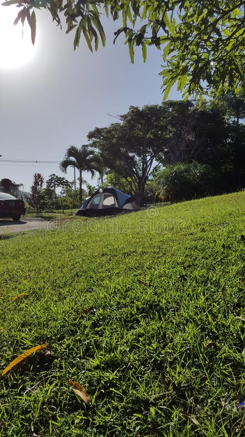 Τροπικό δάσος στο San Sebastian, Πουέρτο Ρίκο στοκ εικόνες με δικαίωμα ελεύθερης χρήσης
