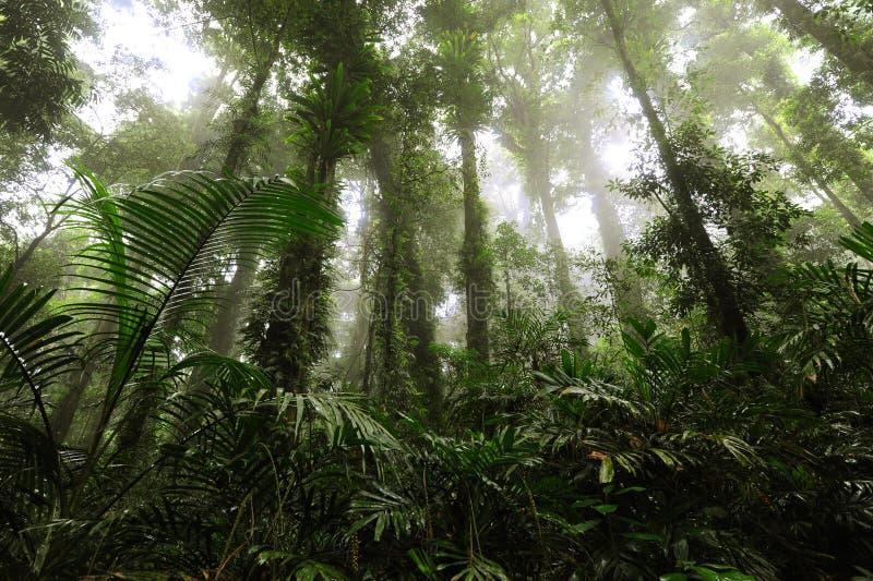τροπικό δάσος υδρονέφωσης στοκ εικόνες