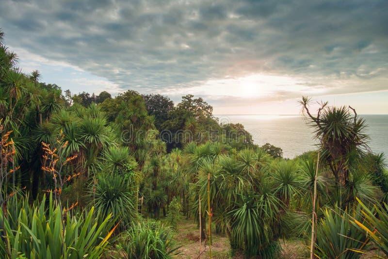 Τροπικό δάσος φοινίκων στοκ εικόνα με δικαίωμα ελεύθερης χρήσης