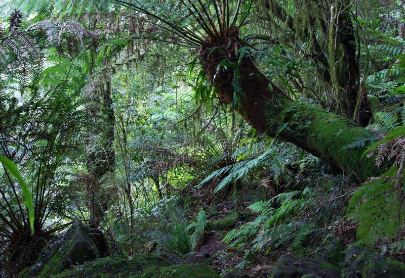 τροπικό δάσος φτερών στοκ εικόνα