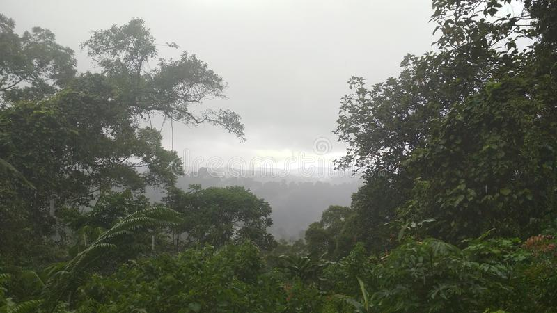 Τροπικό δάσος όταν βρέχει στοκ φωτογραφία με δικαίωμα ελεύθερης χρήσης