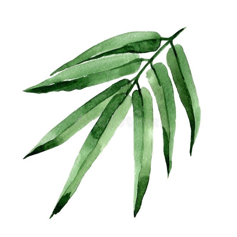 Τροπικό δέντρο μπαμπού φύλλων σε ένα ύφος watercolor που απομονώνεται διανυσματική απεικόνιση