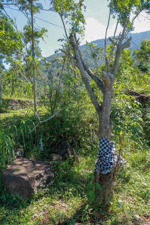 Τροπικό δέντρο στην είσοδο στον ινδό ναό στο νησί του Μπαλί κορμός που τυλίγεται με το ύφασμα με το σχέδιο των γραπτών τετραγώνων στοκ φωτογραφία