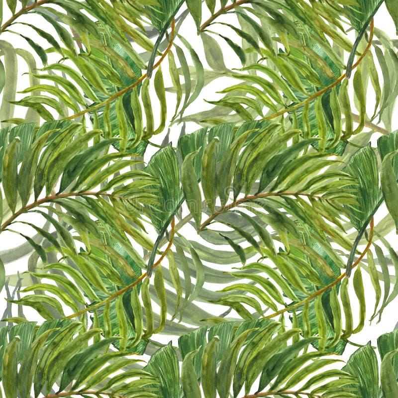 Τροπικό δασικό άνευ ραφής σχέδιο Watercolor με τα εξωτικά πράσινα φύλλα Χρωματισμένο χέρι φύλλο παλαμών στο άσπρο υπόβαθρο Βοτανι διανυσματική απεικόνιση