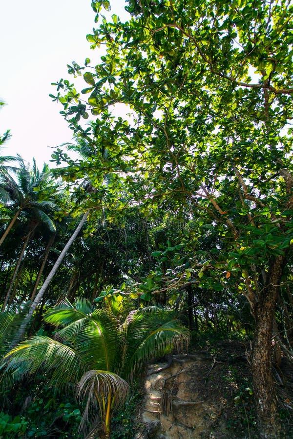 Τροπικό δασικό υπόβαθρο Όμορφη θέση άποψη των δέντρων κατωτέρω στοκ εικόνες