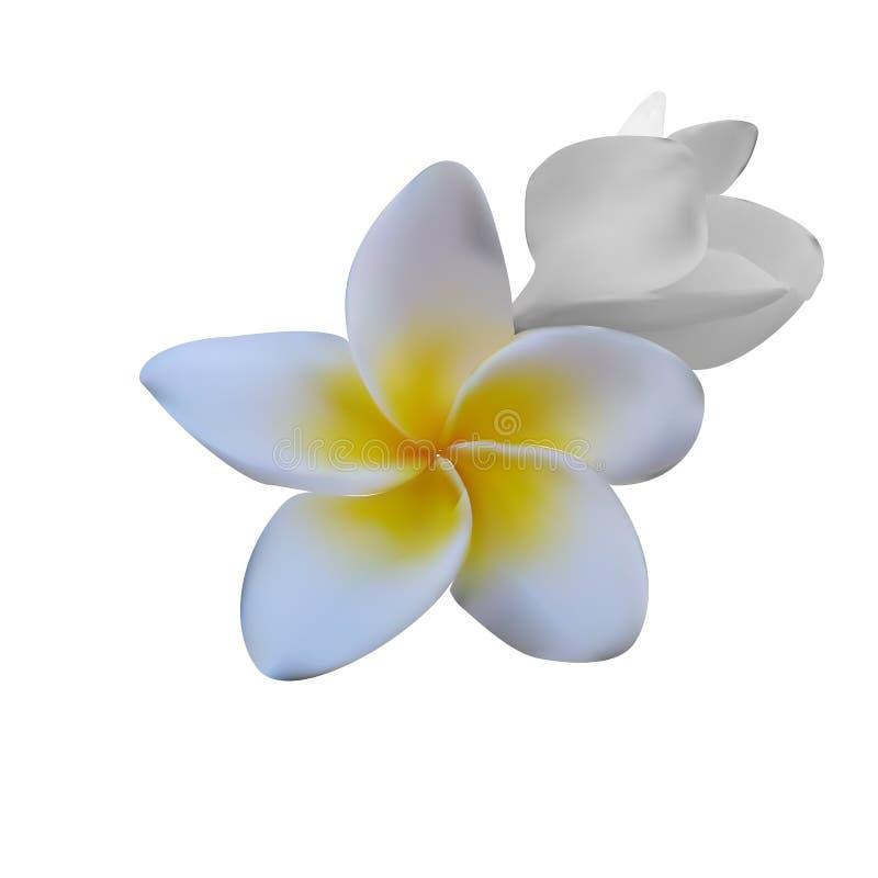τροπικό διάνυσμα shri plumeria περιδεραίων lanka της Ινδονησίας απεικόνισης της Χαβάης frangipani λουλουδιών του Μπαλί επίσης cor στοκ φωτογραφία με δικαίωμα ελεύθερης χρήσης
