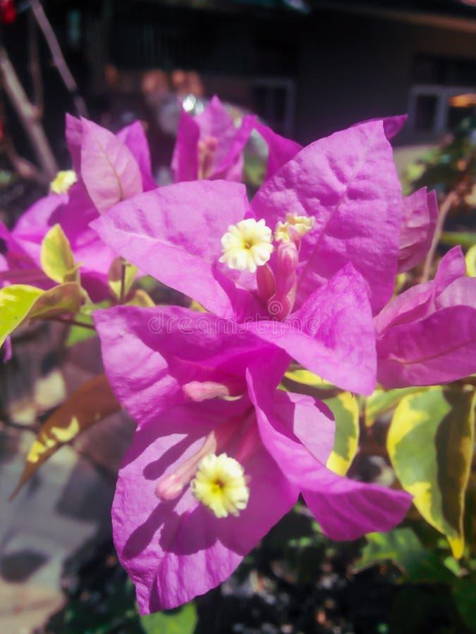 τροπικό κλίμα λουλουδιών στοκ εικόνες