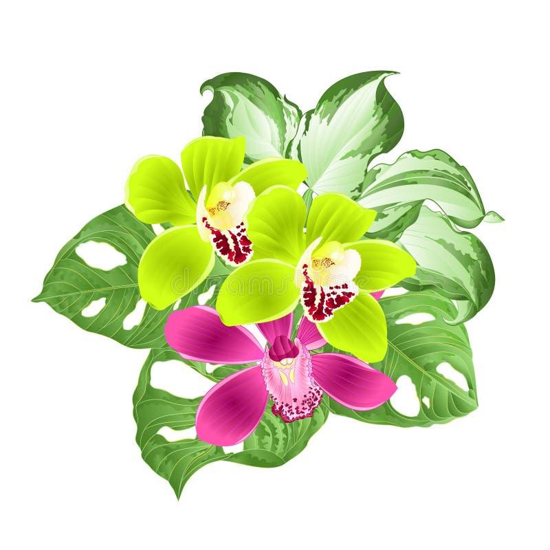 Τροπικό λουλούδια Cymbidium ορχιδεών πράσινο και πορφυρό και Monstera και διαφοροποιημένο φύλλωμα hosta σε ένα άσπρο εκλεκτής ποι ελεύθερη απεικόνιση δικαιώματος