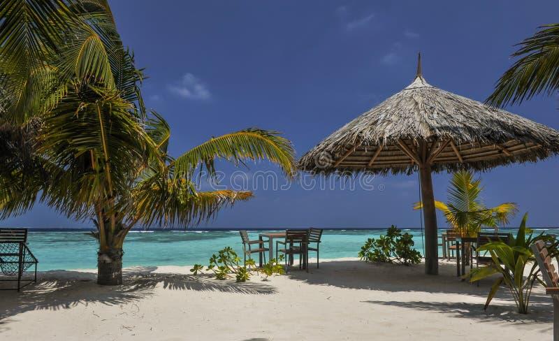 Τροπικό νησί με τους φοίνικες και καταπληκτική δονούμενη παραλία στις Μαλδίβες Άσπρο parasol ρομαντική ατόλλη των Μαλδίβες θάλασσ στοκ φωτογραφία με δικαίωμα ελεύθερης χρήσης