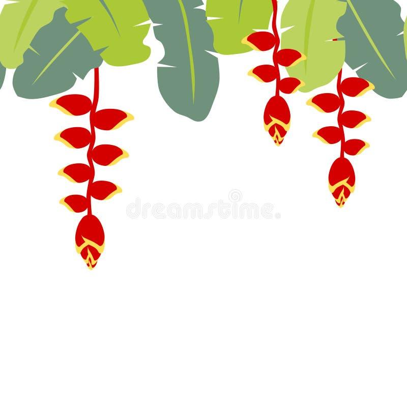 Τροπικό νύχι αστακών λουλουδιών κρεμώντας ελεύθερη απεικόνιση δικαιώματος