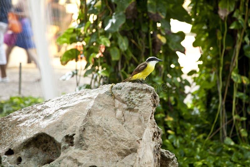 Τροπικό πουλί στοκ φωτογραφία