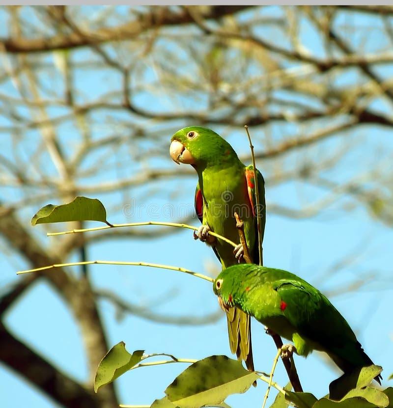 Τροπικό πουλί στοκ φωτογραφίες