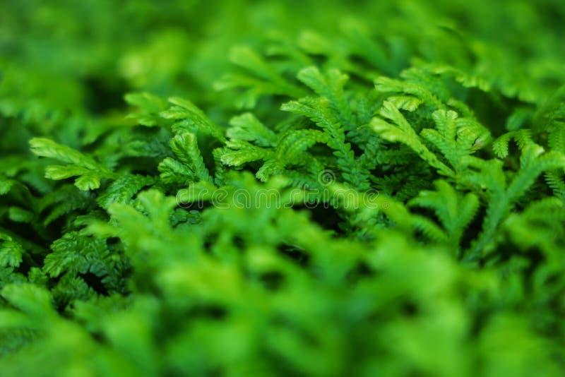 Τροπικό πράσινο φύλλο με το πρωινό φως στον κήπο στοκ εικόνες