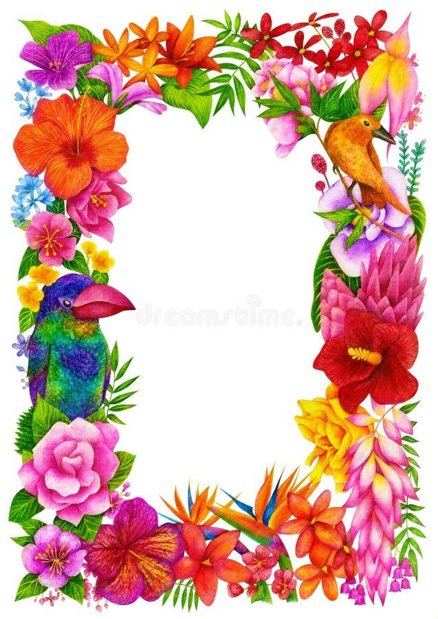 Τροπικό πλαίσιο, βεβαίωση ή δίπλωμα της ολοκλήρωσης Πρότυπο σχεδίου λουλουδιών διανυσματική απεικόνιση