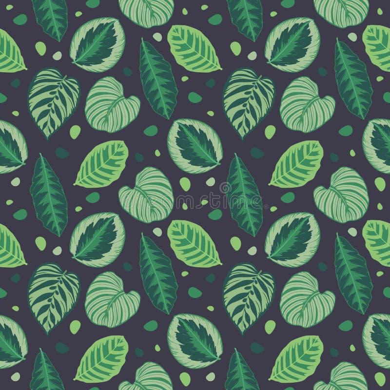 Τροπικό σχέδιο απεικόνισης φύλλων άνευ ραφής γραφικό με τα πράσινα φύλλα φυτών προσευχής Calathea στο μαύρο bacground ελεύθερη απεικόνιση δικαιώματος