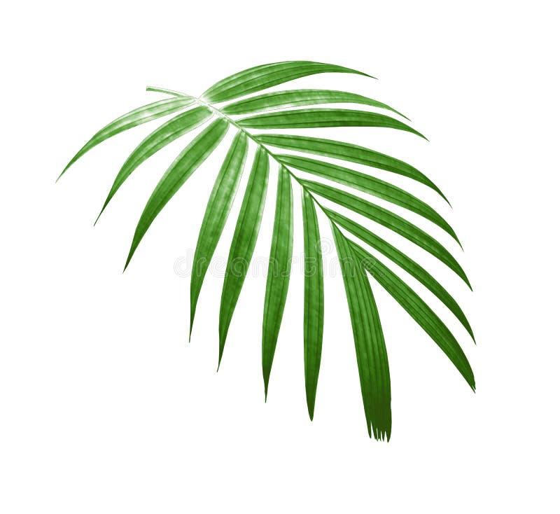 Τροπικό σχέδιο φύλλων φοινικών φύσης πράσινο στοκ εικόνα με δικαίωμα ελεύθερης χρήσης