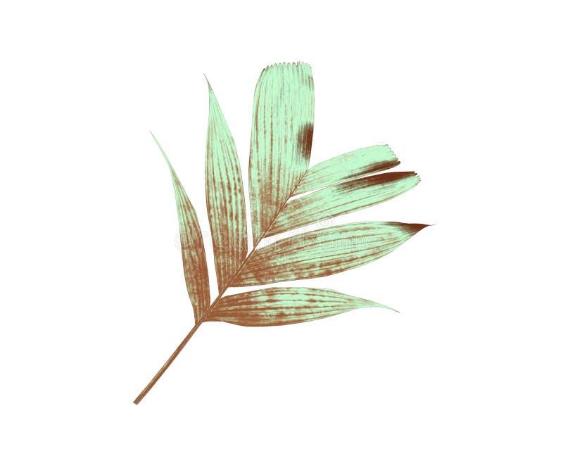 Τροπικό σχέδιο φύλλων φοινικών φύσης πράσινο στοκ φωτογραφία