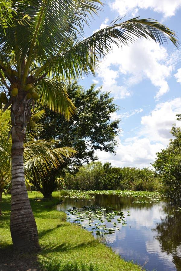 Τροπικό τοπίο στη Φλώριδα Everglades στοκ εικόνες με δικαίωμα ελεύθερης χρήσης