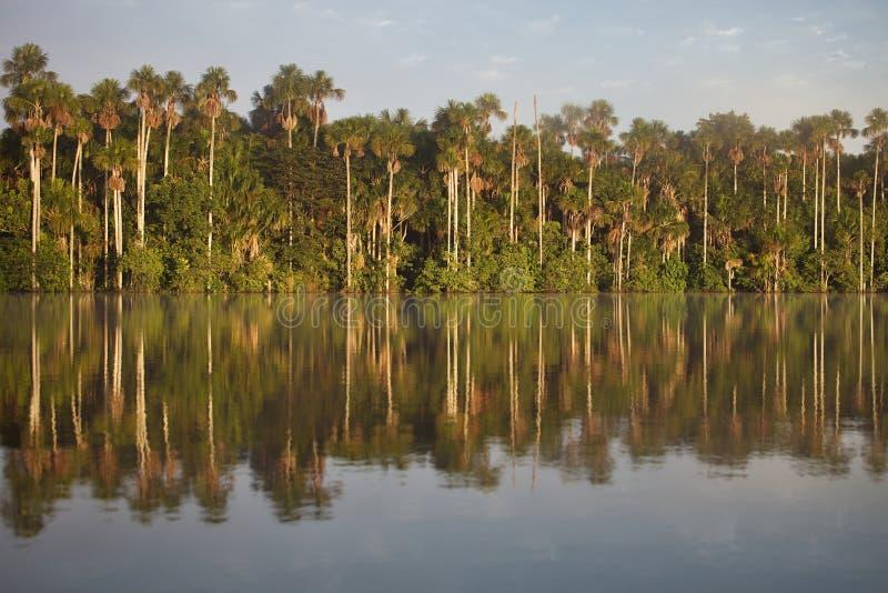 Τροπικό τροπικό δάσος, λίμνη Sandoval, Αμαζονία, Περού στοκ φωτογραφίες