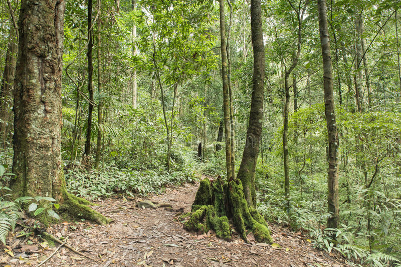 Τροπικό τροπικό δάσος και πάντα πράσινος στοκ φωτογραφίες με δικαίωμα ελεύθερης χρήσης