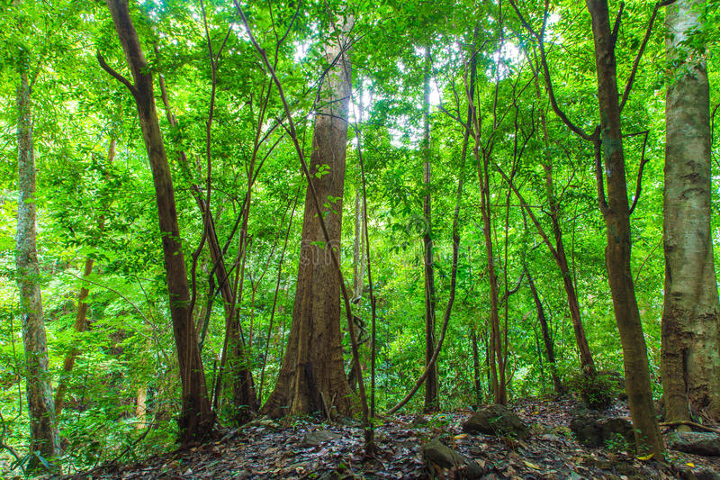 Τροπικό τροπικό δάσος στοκ εικόνες
