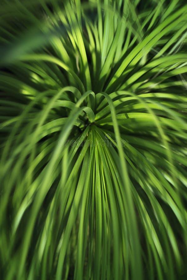 Τροπικό υπόβαθρο φύσης πρασινάδων, πράσινη άδεια αγαύης, που θολώνεται στοκ εικόνες