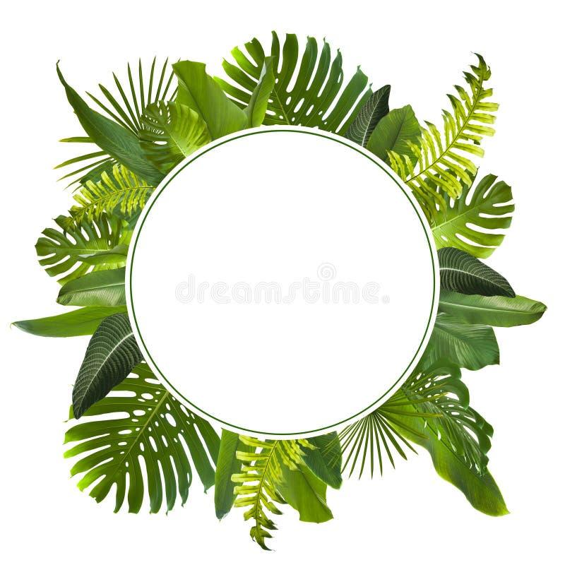 Τροπικό υπόβαθρο φύλλων ζουγκλών στοκ εικόνα