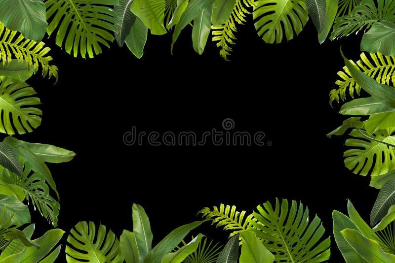 Τροπικό υπόβαθρο φύλλων ζουγκλών ελεύθερη απεικόνιση δικαιώματος