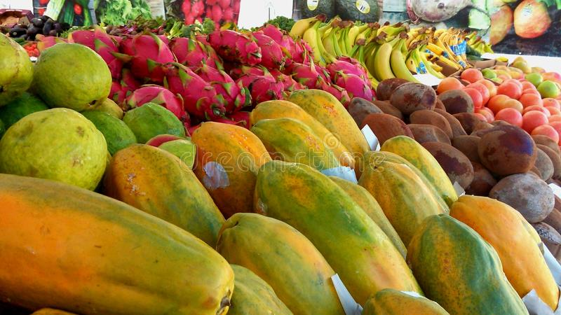 Τροπικό όλοι μαζί Frutti στοκ εικόνες με δικαίωμα ελεύθερης χρήσης