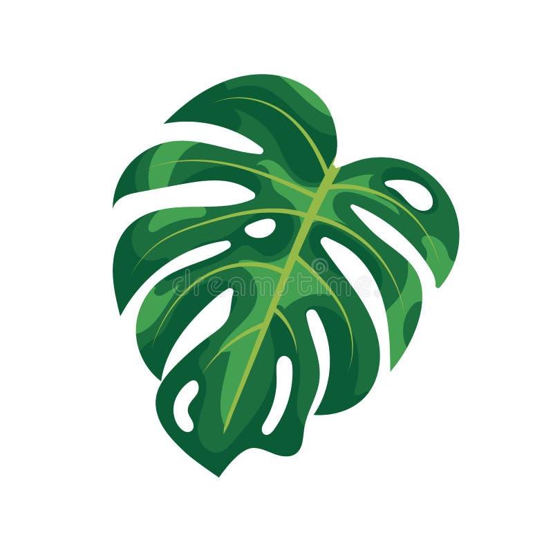 Τροπικό monstera φύλλων φοινικών που απομονώνεται στο άσπρο υπόβαθρο Πράσινο φύλλωμα του τροπικού δέντρου monstera στο άσπρο υπόβ διανυσματική απεικόνιση