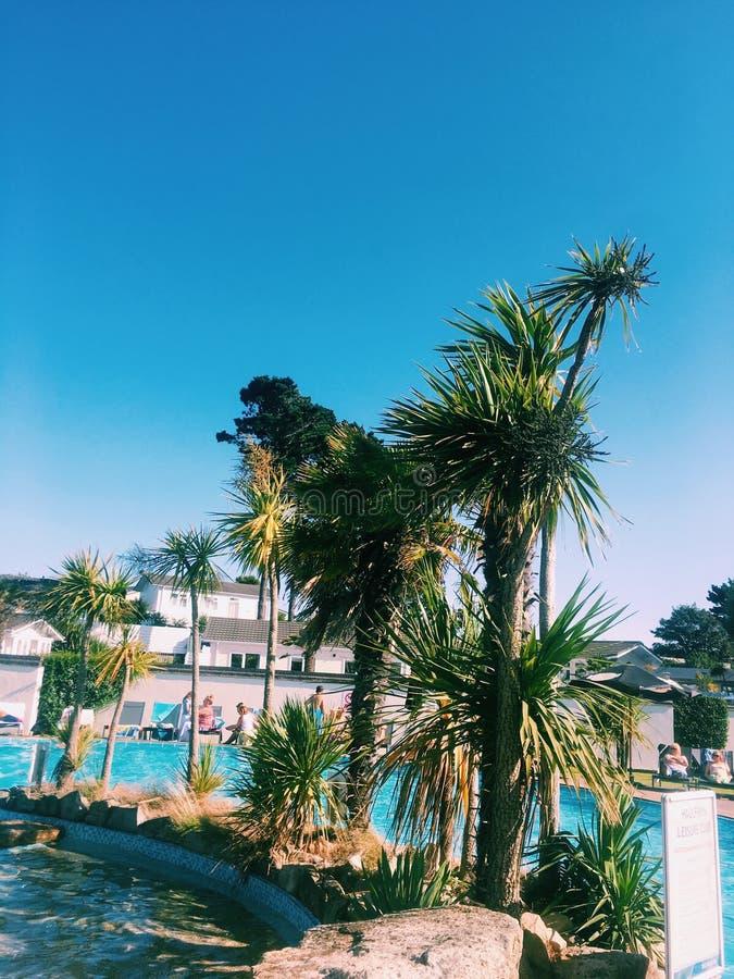 Τροπικό palmtree στοκ εικόνες με δικαίωμα ελεύθερης χρήσης
