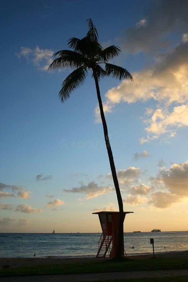 τροπικό waikiki ηλιοβασιλέματ&omic στοκ φωτογραφία