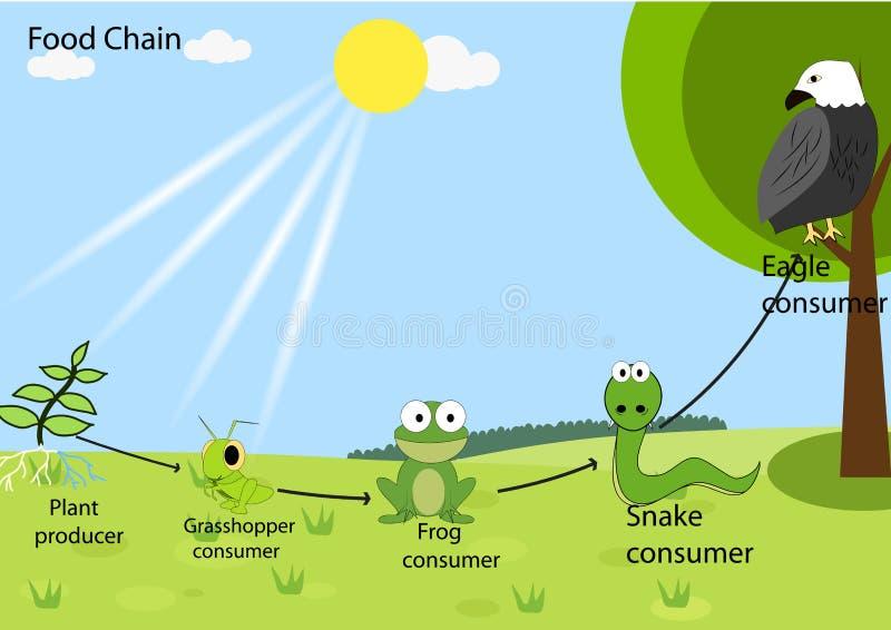 Τροφική αλυσίδα απεικόνιση αποθεμάτων