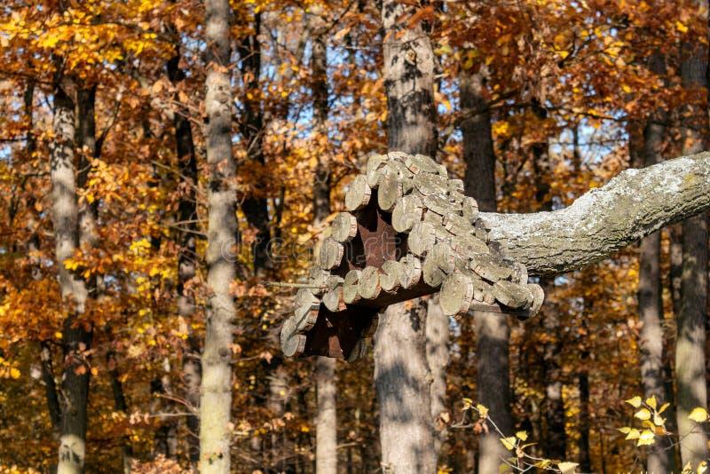 Τροφοδότης ξύλινων πτηνών στοκ φωτογραφίες με δικαίωμα ελεύθερης χρήσης