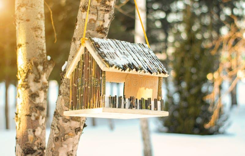 Τροφοδότης Birdhouse σε ένα δέντρο σημύδων το χειμώνα αφηρημένος θερινός ήλιος άνοιξης ακτίνων ανασκοπήσεων στοκ εικόνα