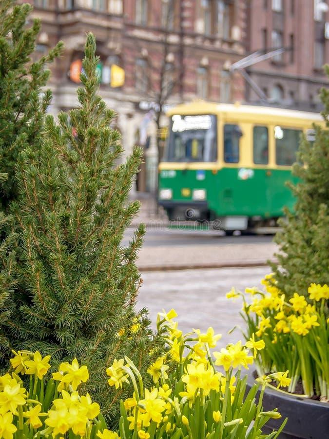 Τροχιοδρομική γραμμή και daffodil λουλούδια στο Ελσίνκι την άνοιξη στοκ εικόνα