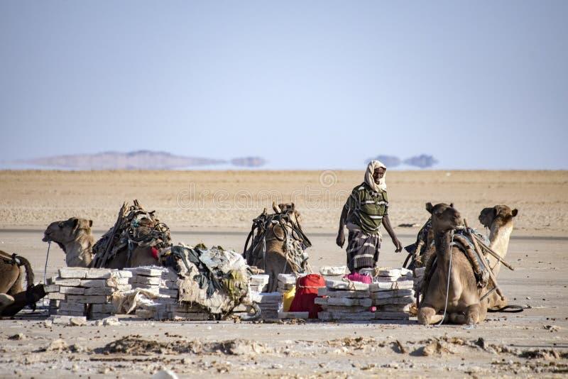 Τροχόσπιτα που μεταφέρουν τους αλατισμένους φραγμούς από τη λίμνη Assale στοκ φωτογραφίες