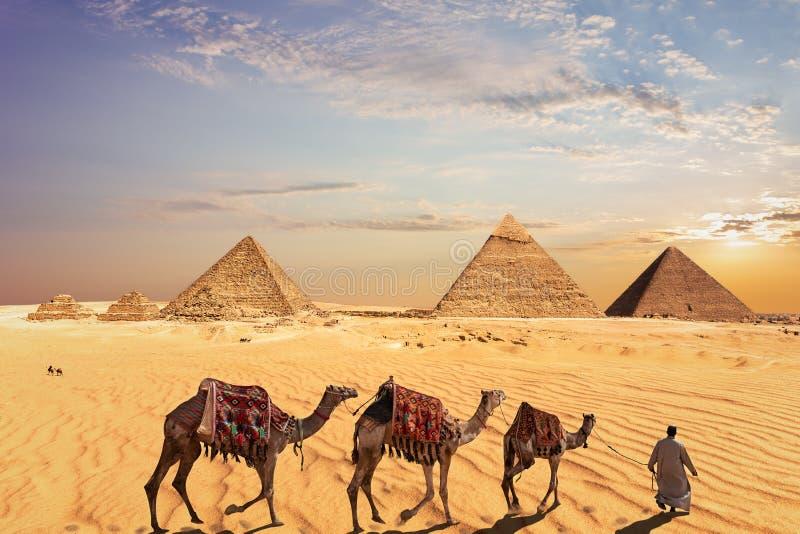 Τροχόσπιτο καμηλών κοντά στις μεγάλες πυραμίδες Giza στην Αίγυπτο στοκ εικόνες