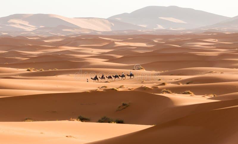 Τροχόσπιτο καμηλών που περνά από τους αμμόλοφους άμμου στην έρημο Σαχάρας Μαρόκο Αφρική Όμορφοι αμμόλοφοι άμμου στη Σαχάρα στοκ εικόνες
