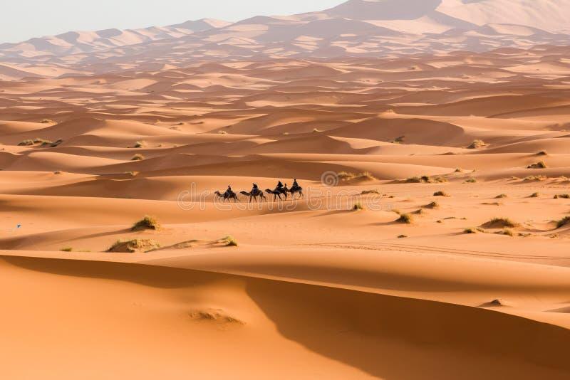 Τροχόσπιτο καμηλών που περνά από τους αμμόλοφους άμμου στην έρημο Σαχάρας Μαρόκο Αφρική Όμορφοι αμμόλοφοι άμμου στη Σαχάρα στοκ φωτογραφία