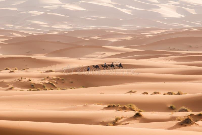 Τροχόσπιτο καμηλών που περνά από τους αμμόλοφους άμμου στην έρημο Σαχάρας Μαρόκο Αφρική Όμορφοι αμμόλοφοι άμμου στη Σαχάρα στοκ φωτογραφίες