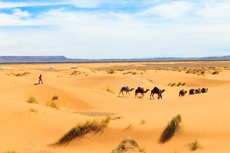 Τροχόσπιτο καμηλών που περνά από την έρημο στοκ εικόνες
