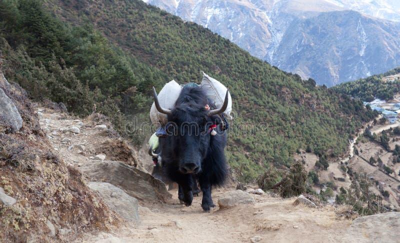 Τροχόσπιτο yak dzo στο Νεπάλ Ιμαλάια στοκ φωτογραφίες με δικαίωμα ελεύθερης χρήσης